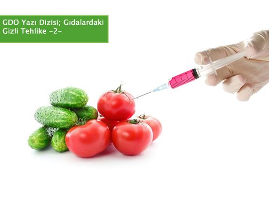 Gıdalardaki Gizli Tehlike: GDO-2